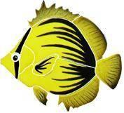 Pool Mosaics - Tropical Fish Mosaics - Artistry in Mosaics - Spiked Butterfly Fish Mosaic