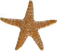 Pool Mosaics - Starfish Mosaics - Artistry in Mosaics - Starfish brown