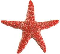 Pool Mosaics - Starfish Mosaics - Artistry in Mosaics - Starfish red